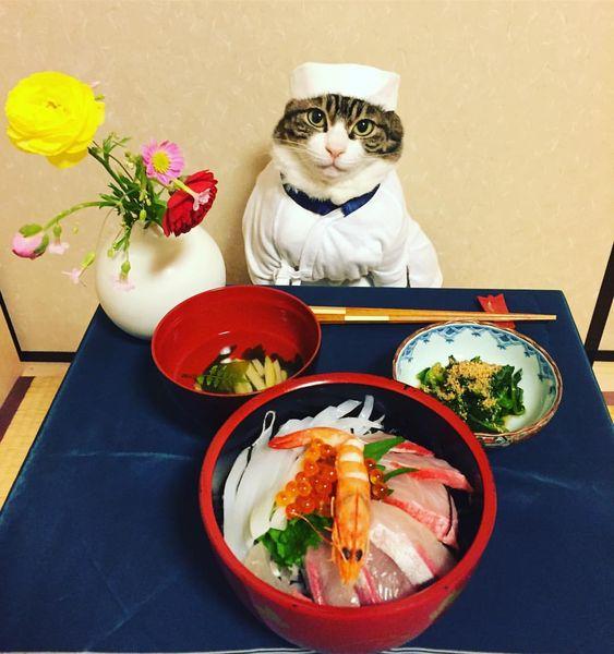 ニャンコの寿司屋